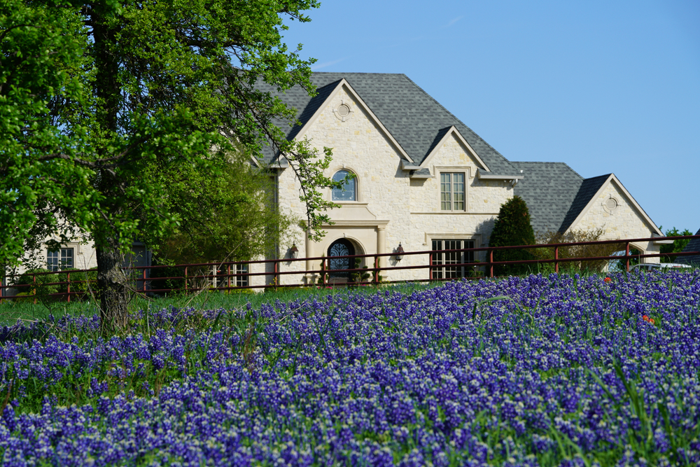 View of blooming Bluebonnet flowers during spring time near the Texas Hill Country