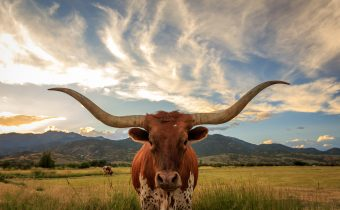 How to Plan a Great Texas Travel