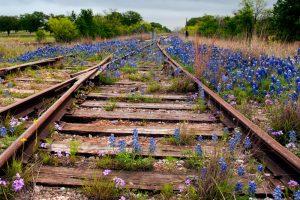 texas-railroad-and-bluebonnets